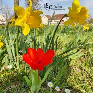 الربيع جنوب ألمانيا - بعدسة جمال خضر
