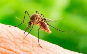 السويد تكتشف طريقة جديدة لوقف انتشار الملاريا